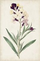 Antique Botanical Collection VII Framed Print