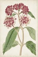 Antique Botanical Collection XI Framed Print