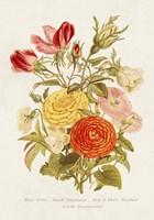 Antique Floral Bouquet I Framed Print