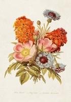 Antique Floral Bouquet II Framed Print