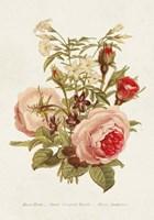 Antique Floral Bouquet III Framed Print
