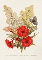 Antique Floral Bouquet V Framed Print