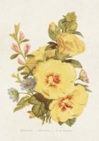 Antique Floral Bouquet VI Framed Print