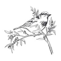 Simple Songbird Sketches I Framed Print