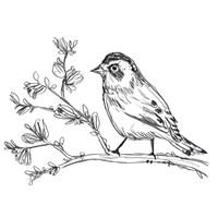 Simple Songbird Sketches II Framed Print