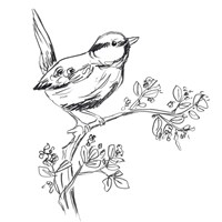 Simple Songbird Sketches IV Framed Print