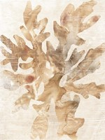 Parchment Coral IV Framed Print