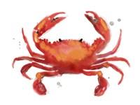 Crab Cameo I Framed Print