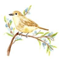 Springtime Songbirds II Framed Print