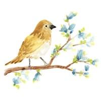 Springtime Songbirds III Framed Print