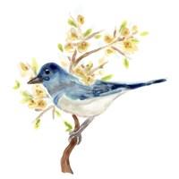 Springtime Songbirds IV Framed Print