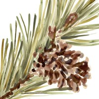 Simple Pine Cone I Framed Print