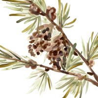 Simple Pine Cone II Framed Print