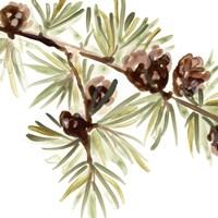 Simple Pine Cone III Framed Print