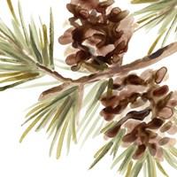 Simple Pine Cone IV Framed Print