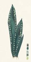 Snake Plants III Framed Print
