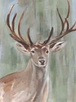 Roaming Buck II Framed Print