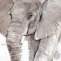 Elephant Grooves I Framed Print