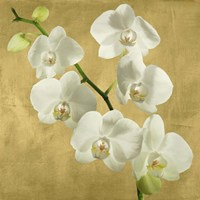 Orchids on a Golden Background I Framed Print