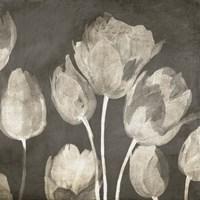 Washed Tulips II Framed Print