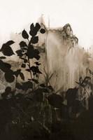 Silhouette Leaves 2 Framed Print