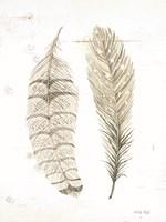 Feather I Framed Print