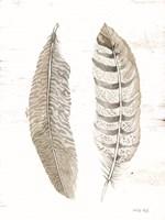 Feather II Framed Print