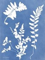 Blue Botanical II Framed Print