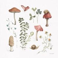 Forest Treasures 02 Framed Print