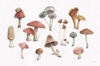 Mushroom Medley 01 Fine Art Print