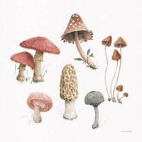 Mushroom Medley 03 Fine Art Print