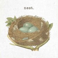 Spring Nest III Nest Framed Print