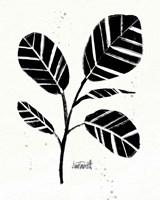 Botanical Sketches IV Framed Print