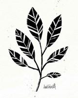 Botanical Sketches III Framed Print