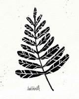 Botanical Sketches II Framed Print