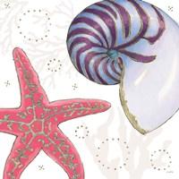 Shimmering Shells II Framed Print