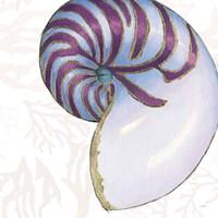 Shimmering Shells VI Framed Print
