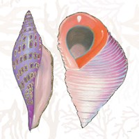 Shimmering Shells X Framed Print