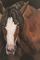 Horse Portrait I Framed Print