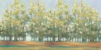 Aspen Grove III Framed Print