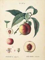 Peaches II Framed Print