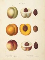 Peaches I Framed Print