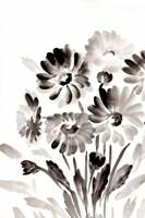Simple Black Daisies Fine Art Print