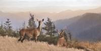 Cascade Mountain Deer Fine Art Print