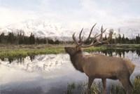 Bull Elk in Tetons Fine Art Print