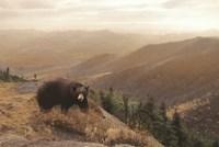 Bear Country Framed Print