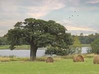 Summer Hay Harvest Fine Art Print