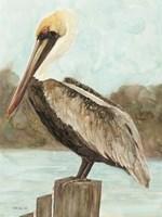 Brown Pelican 3 Framed Print