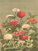 Antique Botanical Collection 1 Framed Print