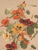 Antique Botanical Collection 2 Framed Print